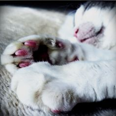 I love kitty paws.