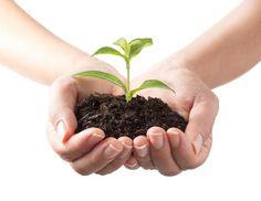 Welche pflanzlichen Mittel können bei Kinderwunsch helfen und deine Fruchtbarkeit steigern? Mit Rezepten und Anwendungsbeispielen