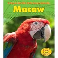 Macaw « LibraryUserGroup.com – The Library of Library User Group