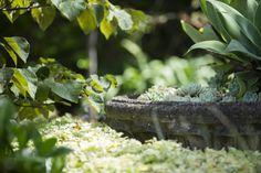 Peter Fudge Gardens clanalpinest_mosman_050