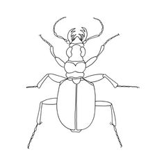 """Line Drawing, Beetle Art, Fine Art Print, Minimalist Poster, 10x10"""", Black White Wall Art, Illustration, Wall Hanging, Insect Collection on Etsy, $17.08"""