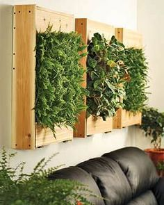 Living wall garden using wooden boards Hanging Planters And Container Backyard Concepts For Indoors other Indoor Planters, Hanging Planters, Hanging Gardens, Indoor Herbs, Herb Plants, Garden Living, Home And Garden, Herb Garden, Spring Garden
