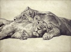 Asiatic Lion I / Panthera leo persica / 2007 / 90 x 122 cm / Pencil on panel