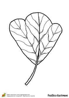 coloriage dessin feuilles automne tulipier
