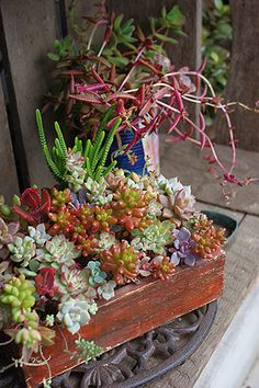 succulents....