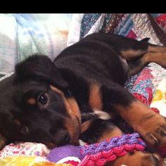 adorable baby puppy :)