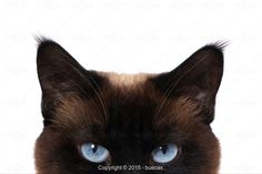 Buecax, cat eyes - Stock Photos & Images | Stockafe.com #stockafe #stockphotography