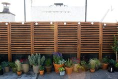 IKEA panels, plants, and solar lights Planter box below with grass or dark green clean foliage