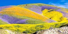 "California's Rare ""Super Bloom"" Is Moving North into the Central Valley"