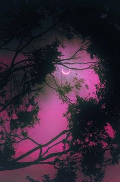 Crescent moon in a magenta colored sky