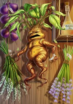 Mandrake – The Harry Potter Lexicon Harry Potter Painting, Harry Potter Fan Art, Slytherin, Hogwarts, Harry Potter Mandrake, Halloween Magic, Fantastic Beasts, Illustration, Deviantart
