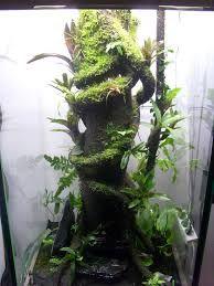 """Résultat de recherche d'images pour """"branche epiweb terrarium"""""""