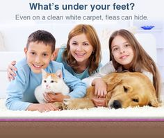 How to get rid of fleas in your home~