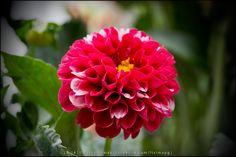 [2014 - Quintela de Lampaças - Portugal] #fotografias #flor #flores #flower #flowers
