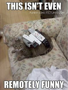Remotely Funny Cat Picture | Funny Joke Pictures