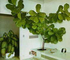 The Complete Book of Houseplants & Indoor Gardening ©1979
