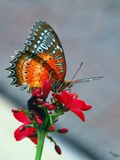 Butterfly - I know that Heaven will have a garden with more colors than we can imagine