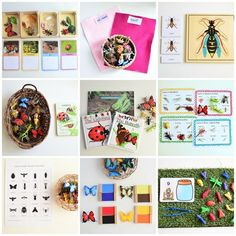 Learning activities on insects for 3 years old