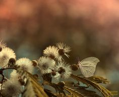 The touch by Eleonora Di Primo on 500px