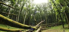 Faggeta dei Monti Cimini: una passeggiata nel bosco patrimonio dell'UNESCO #Faggeta, #LuoghiNaturalistici, #MontiCimini, #Natura, #Passeggiate, #PatrimonioDellUmanitàUNESCO, #Sentieri, #SorianoNelCimino, #Tuscia, #Unesco, #Unitus, #Viterbo http://travel.cudriec.com/?p=4219