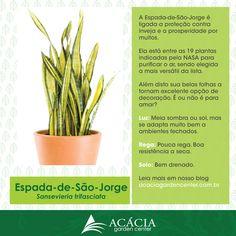 Cactus Plants, Garden Plants, Spanish Garden, Inside Garden, Vintage Garden Decor, Types Of Succulents, Plant Guide, Succulent Gardening, Interior Plants