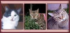 Tomcat, Alley Cat and Bengal Cat.  They are from left to right Felix, Lucy and Oscar.
