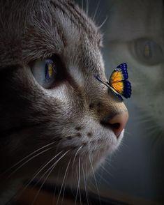 Beautiful Kittens, Cute Kittens, Cute Cats And Dogs, I Love Cats, Animals Beautiful, Cats And Kittens, Beautiful Creatures, Beautiful Images, Nature Animals