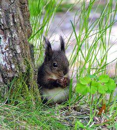 Petit écureuil mignon