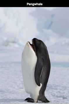 hilarious-animal-hybrids-19 This terrified me! I love orcas, and this is honestly the creepiest thing ever!