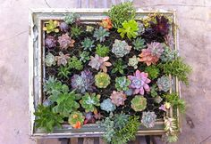 How to Make a Succulent Frame | Planet Natural