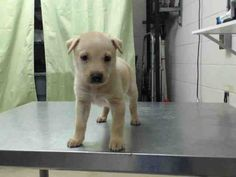 HOUSTON, TX...PetHarbor.com: Animal Shelter adopt a pet; dogs, cats, puppies, kittens! Humane Society, SPCA. Lost & Found.