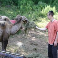 $3000 Sponsor a Camel in the petting zoo in camp