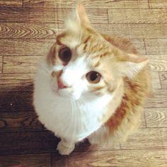猫のための小さなお家(@nekoouchi)さん | Twitter