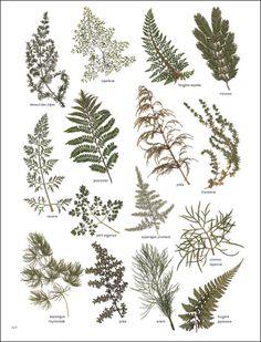 Feuilles & Branchages #herbier