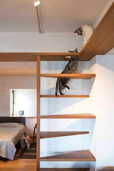 Cat Walkway, Cat Wall Furniture, Cat Wall Shelves, Cat Stairs, Cat House Diy, Living With Cats, Cat Playground, Cat Condo, Cat Room