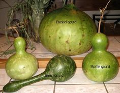 Types of Large Gourds | also became quite fascinated with gourds and more so now that I ...