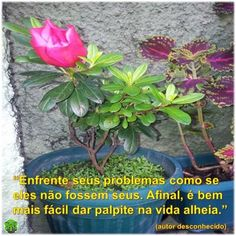 #enfrentar #problemas #palpite #vidaalheia #fácil #difícil #psicologia #psicóloga #NovaIguaçu #cognitivocomportamental #followme