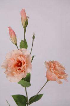 peach Lisianthus - Google Search