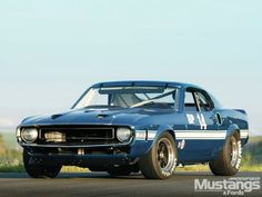 1969 Ford Mustang Shelby GT 500 - A Legend Lives On Photo & Image Gallery