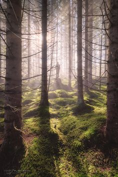 Where the wild things roam Misty Forest, Travel Photography, Country Roads, Landscape, Plants, Wild Things, Pictures, Facebook, Check