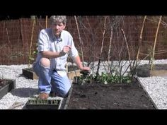 HOW TO PLANT AND GROW LEEKS - PUDDLING IN Mark Abbott-Compton in Cornwall