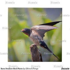 Barn Swallow Bird Photo Ceramic Tile