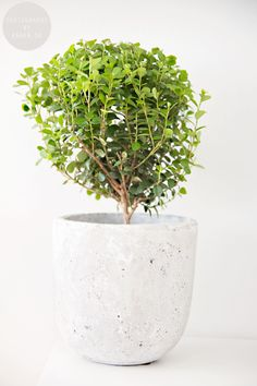 House plants that are hard to kill.  I'll see if this is true.  No green thumb whatsoever.  But I'm gonna change that:)