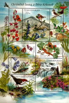 Stamp: Protected Fauna and Flora - MiNo. (Czech Republic) (Protection of Nature: Krkonoše Mountains) Mi:CZ Decoupage, Sell Stamps, Stamp Catalogue, Writing Paper, Stamp Collecting, Czech Republic, Postage Stamps, Vintage World Maps, Flora