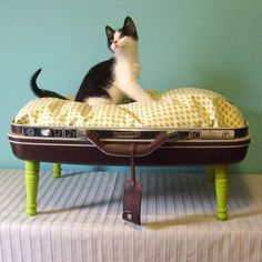 buy or diy project: vintage suitcase made into a pet bed