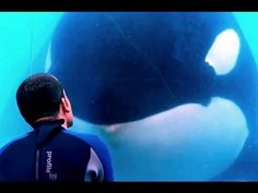 ▶ Blackfish - Official Trailer (HD) Documentary, Orca - YouTube  (watched this at the quad heart breaking) The horrible screaming of the whales is awful. Fuck you sea world!