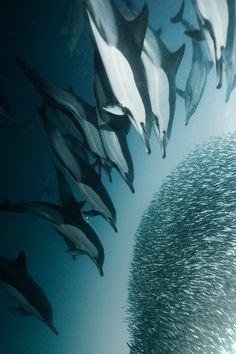 Every divers dream - the Sardine Run up the South West coast of Africa.... don't think I'll ever do this TBH.