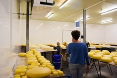 Guided tour at the Kaasboerderij Schep cheese factory Cheese Factory, Tour Guide, Netherlands, Tours, The Nederlands, The Netherlands, Holland, Travel Guide