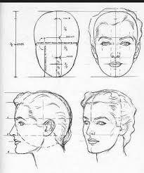 Risultati immagini per facial proportions