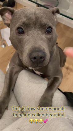Super Cute Puppies, Cute Baby Dogs, Cute Funny Dogs, Super Cute Animals, Cute Dogs And Puppies, Cute Little Animals, Cute Funny Animals, Cute Pitbull Puppies, Doggies